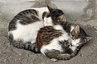 2_russian_street_cats-crop