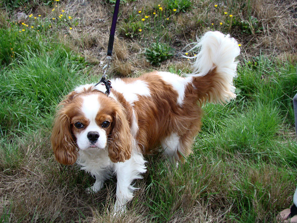 Best Low Maintenance Small Dog Breeds