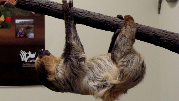 The Sloth (j33pman / Flickr)
