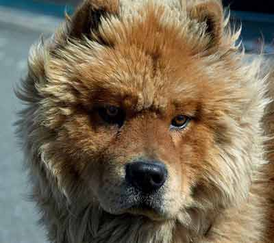 Image Result For Low Prey Drive Dogs