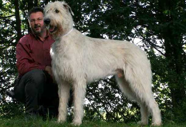 10 Largest Dog Breeds - Curiosity Aroused