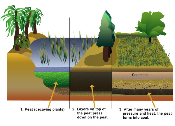 peat-transforms-into-coal