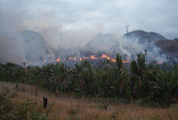 Slash and burn agriculture (Photo credit: Wikipedia)